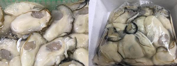 宮島生牡蠣